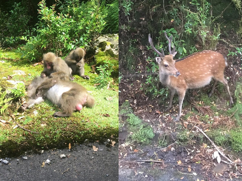 屋久島の鹿と猿